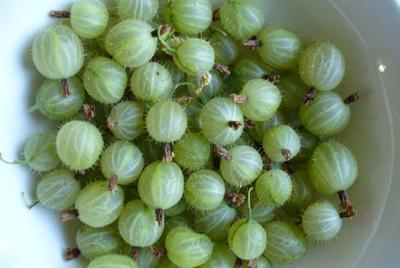 Gooseberry Remedy for Diabetes