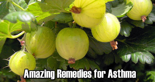15 Amazing Home Remedies for Asthma
