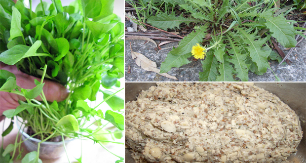 15 Herbal Home Remedies for Goitre