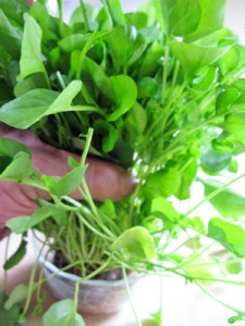 Watercress for Goiter Cure