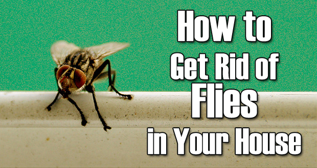 Remedies to Get Rid of Flies