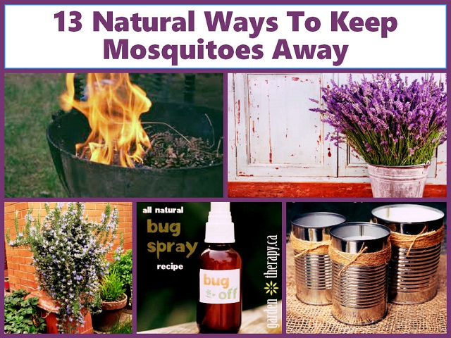 How To Get Rid Of Mosquitoes In Your House & Yard