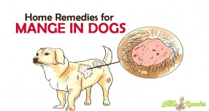 8 Sure-Shot Home Remedies for Mange in Dogs