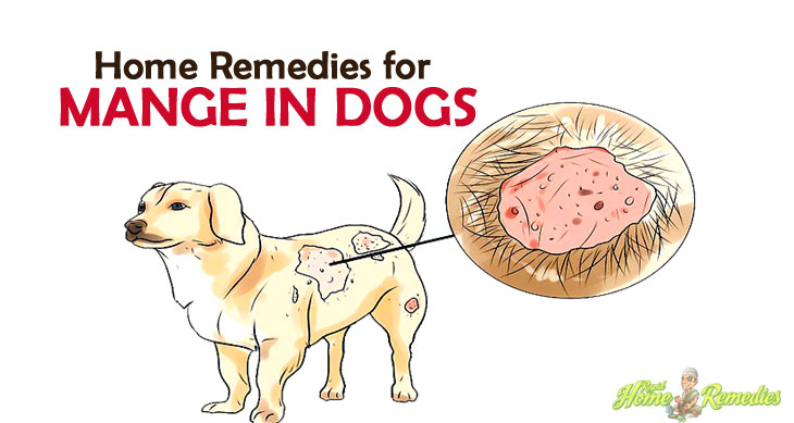 Remedies for Mange in Dogs